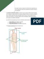 Posiciones-Anatómicas