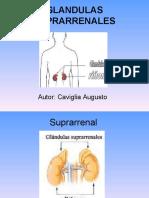 Glandulas Suprarrenales Caviglia Augusto