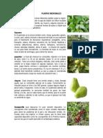 plantas medicinales, ornamentales indutriales.docx