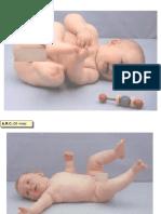 Diapontogenesi 04-06 mesi.ppt