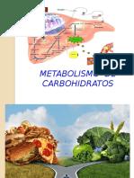 metabolismo del CHO