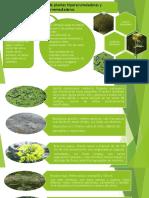 expo-plantas.pptx