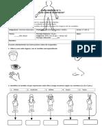Evaluación Cs.naturales 1_ Los Sentidos