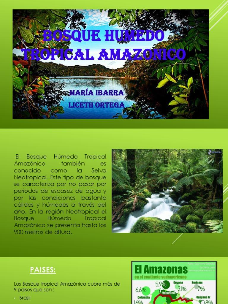Bosque Humedo Tropical Amazonico Selva Amazonica Zona Tropical