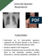Aparato respiratorio Anatomia