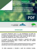 A Cacauicultura No Brasil
