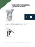 La Anatomía Es Un Conocimiento Científico Que Nada Tiene Que Ver Con La Práctica Artística