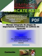 Manejo Integrado Plagas Importancia Economica Cultivos Aguacate