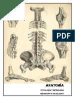 Anatomía para colegio