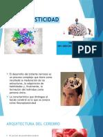 Neuroplasticidad Gonzalo