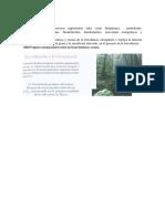Fotosintesis y Respiracion en Plantas Grado 10