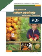 Cadena Del Aguaymanto Documento