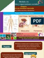 AI5. Sistema Nervioso y Reproductivo/Módulo 16