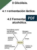 Glicólisis y fermentación