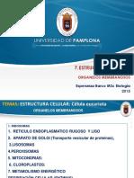 7. ORGANELOS MEMBRANOSOS