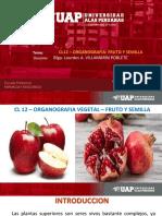 ORGANOGRAFIA VEGETAL - FRUTO Y SEMILLA