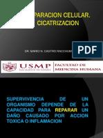 3. Reparacion-Cicatrizacion.ppt