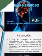 Sistema Nervioso Central -19