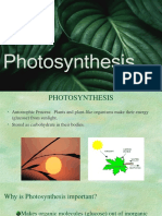 15.-Photosynthesis.ppt