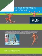 Factores Que Afectan El Muscular