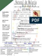 Historia Natural de la Malaria.ppt