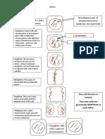 Mitosis vs Meiosis Comparison Summary