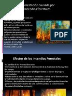 Presentación deforestación.pptx