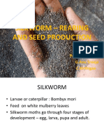 Silk worm Rearing and sex separation