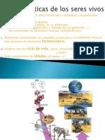 Características y  niveles organización de los seres vivos