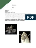 Formación de la Plata Nativa.docx