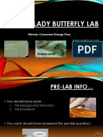 APES Lady butterfly lab