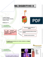 Sistema Digestivo II