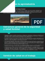 Seguridad en la agroindustria forestal expog.pptx