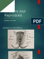 1. Anatomi Alat Reproduksi