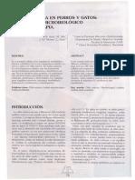 OTITIS EN PERROS Y GATOS.pdf