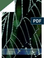 Arañas Biogeografia de Iberoamerica