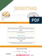 VIAS AFERENTES.pdf