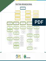 Estructura Organizacional Odl