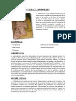 COLIBACILOSIS PORCINA.docx