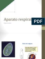 Aparato respiratorio 1