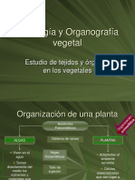 Histologia y Organografia Vegetal