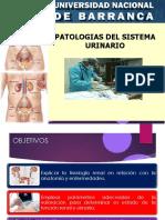 Patologias del aparato renal y urinario.pptx