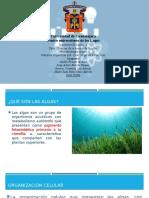 Algas.pptx