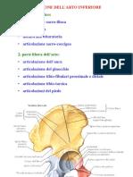 12. Articolazione Coxo-femorale