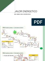 ATP Y ENERGIA.pdf