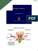 Clase 7 Flor e Inflorescencia