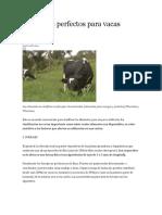Alimentos Perfectos Para Vacas Lecheras