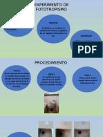 Presentación Foto,Hidro,Geo Tropismo
