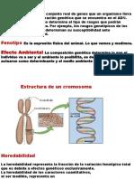 Clase o9 Genotipo