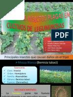 Exposicion de Plagas en Leguminosas